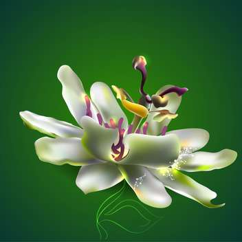 Vector illustration of passion flower on green background - Free vector #128953