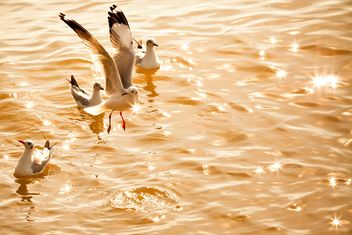 Seagulls on shining water - image #136323 gratis