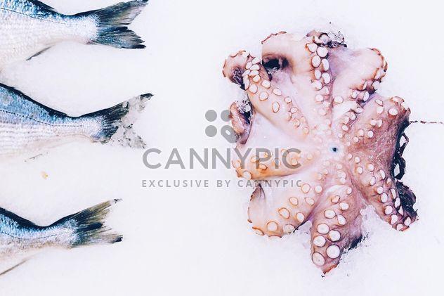 Poulpes et poissons frais - image gratuit #136483