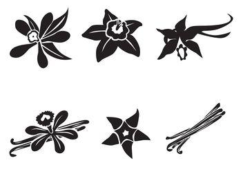 Free Vector Vanilla Flower - бесплатный vector #145613