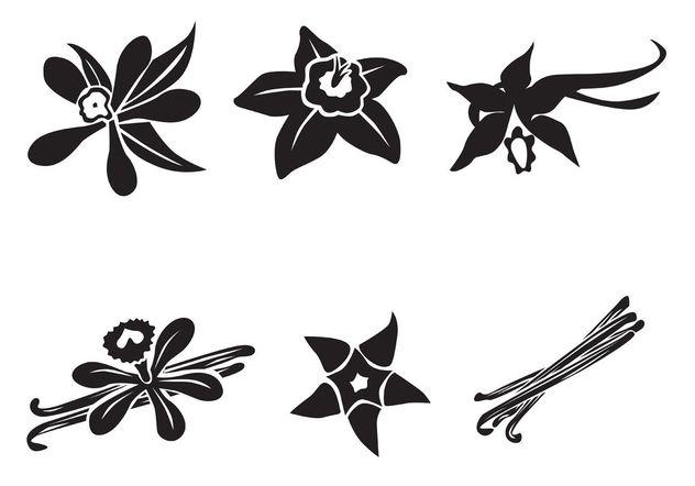 Free Vector Vanilla Flower - Free vector #145613