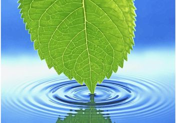 Green Leaf Water Ripple - vector gratuit #145643