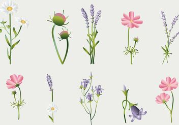 Flower Vectors Collection - Free vector #146603