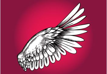 Bird Wing - vector gratuit #157103