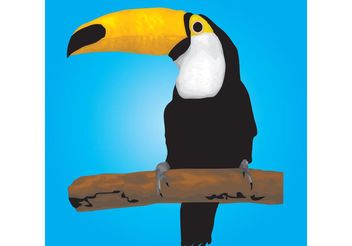 Toucan Bird - vector gratuit #157343