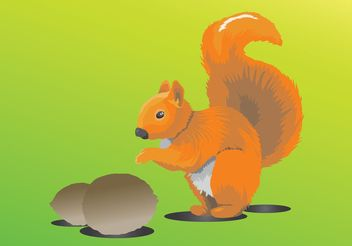 Squirrel - vector gratuit #157393