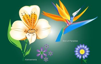 Flower Pack with Bird of Paradise - Free vector #172013