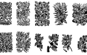 11 Old Plant Engravings Vector - Free vector #172353