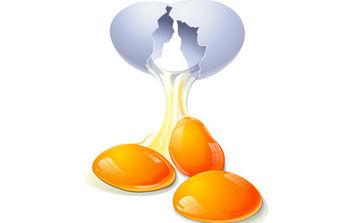 Eggs Vector - Kostenloses vector #175433
