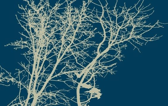 Tree Silhouettes - Free vector #179163
