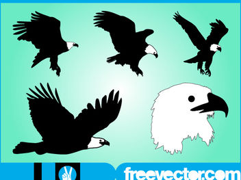 Bald Eagle Nature Animal Set - vector #181313 gratis