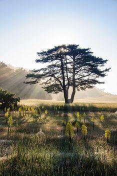 Sun behind tree - image #182923 gratis