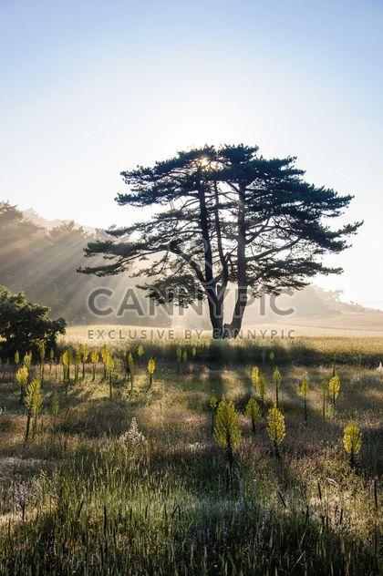 Sol detrás de árbol -  image #182923 gratis