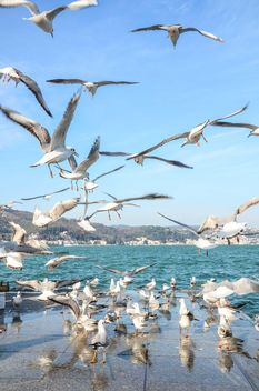 Seagulls on seafront under blue sky - бесплатный image #182973