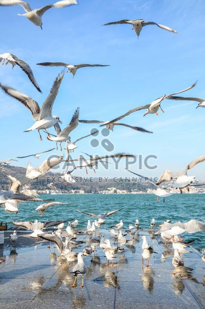 Seagulls on seafront under blue sky - Free image #182973