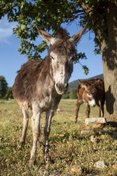 Cute donkeys on meadow - image #183063 gratis