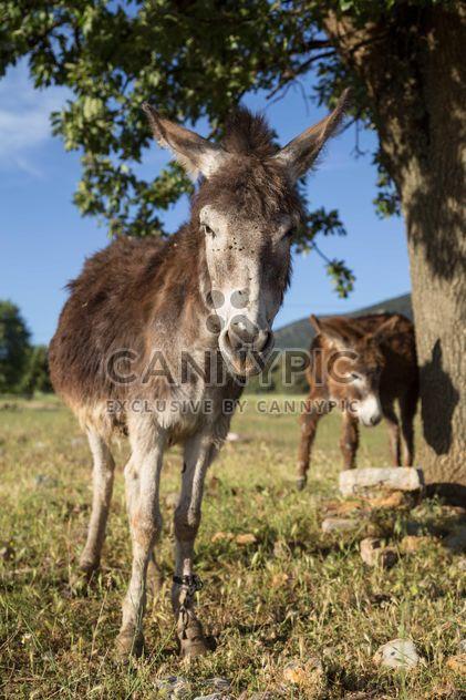 Симпатичные ослов на лугу - бесплатный image #183063