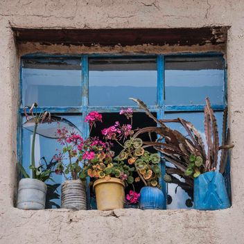 Flowers in front of window - image #183113 gratis