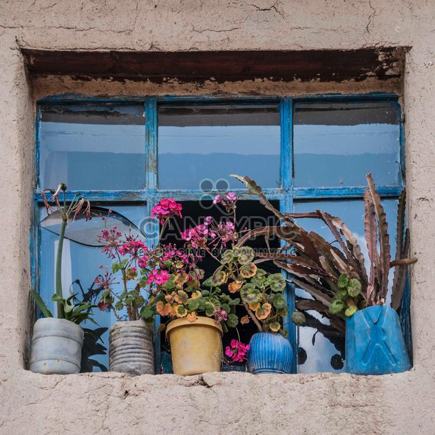 Flowers in front of window - Free image #183113