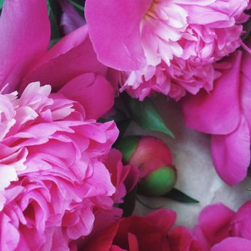 Pink peony flowers - Kostenloses image #183193