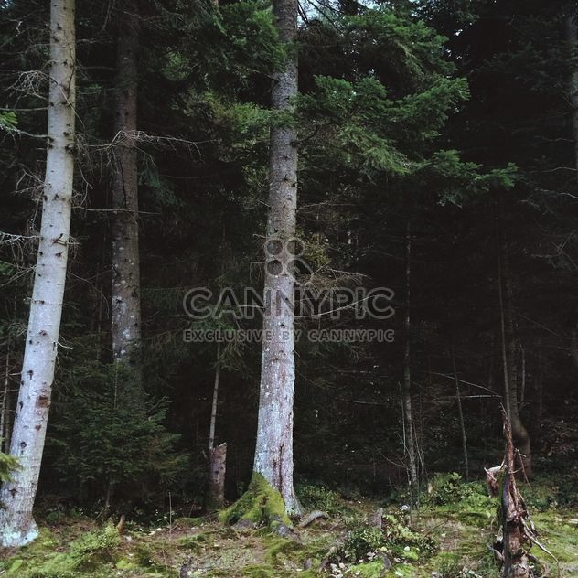Trees in Ukrainian forest - Free image #183533