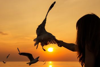 Girl feeding seagull - Free image #183543