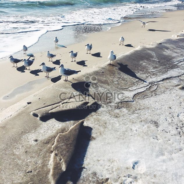 Seagulls on seashore in sunny day - Free image #183553
