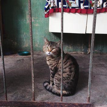 Odessa cat - Free image #183673