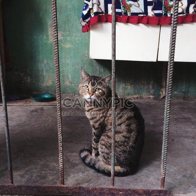 Gato de Odessa - image #183673 gratis