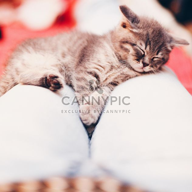 Cute sleeping kitten - Free image #183743