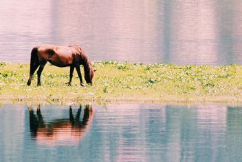 Brown horse grazing on shore of river - бесплатный image #184043
