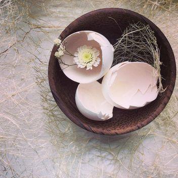 Eggshells - image #184383 gratis