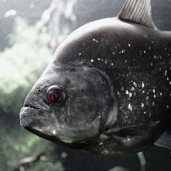 Grey fish - image #184533 gratis