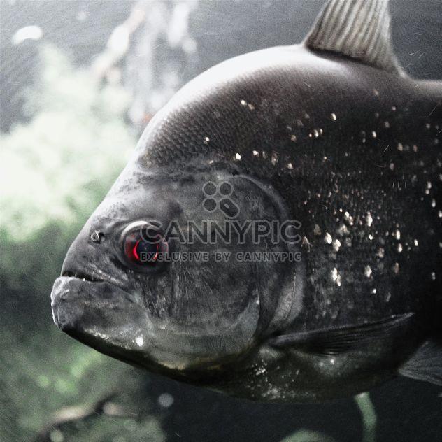 Серая рыба - бесплатный image #184533