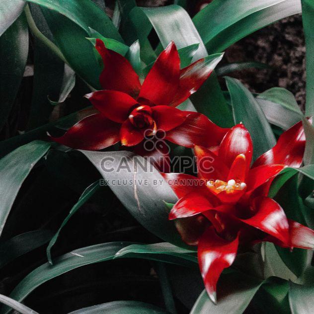 красные цветы - бесплатный image #184603