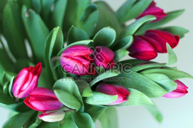Розовые тюльпаны - бесплатный image #185873