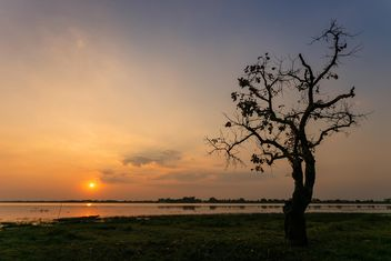 Tree on shore of river at sunset - image #186073 gratis