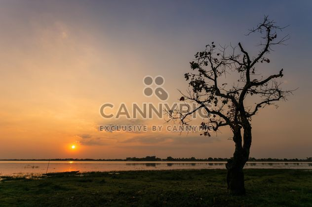 Tree on shore of river at sunset - Free image #186073