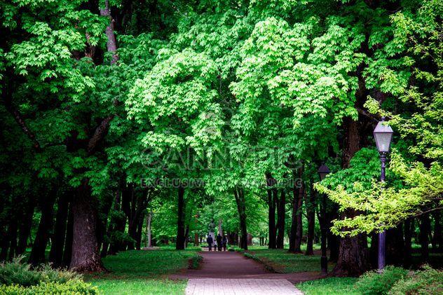 Spring park - Free image #186163