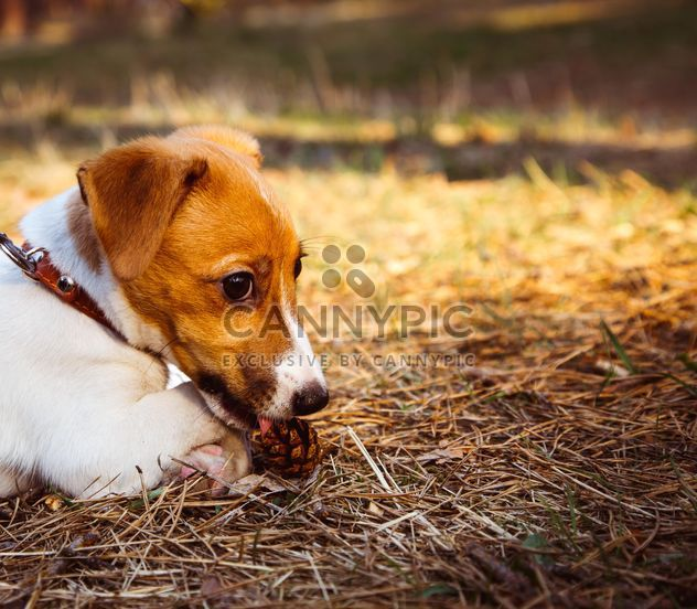 Small puppy in forest - Free image #186193