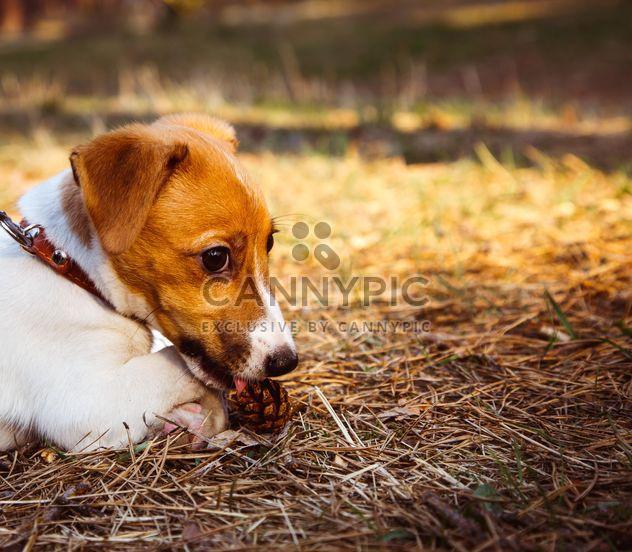 Маленький щенок в лесу - Free image #186193