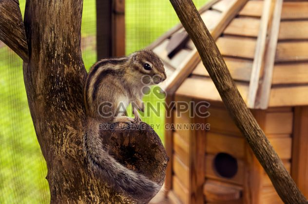 Cute chipmunk in zoo - Free image #186773