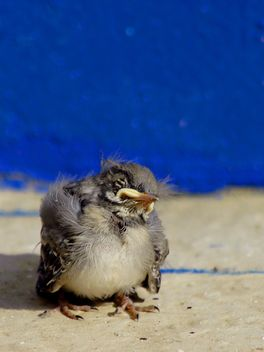 Small young sparrow - image gratuit #187763