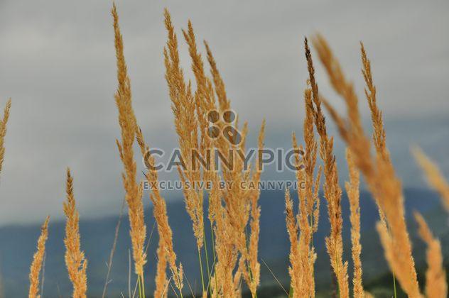 Avec des graines d'herbe - image gratuit #198123
