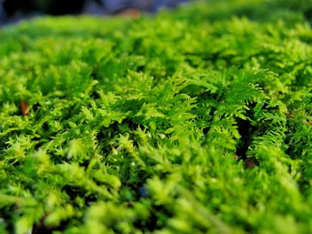 Moss close-up view - Free image #198173