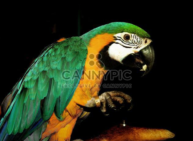 Portrait of macaw parrot - Free image #198223