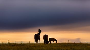 horse in the field close up - Free image #198583