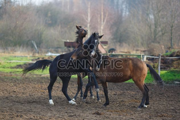 horse play outdoors - image #198603 gratis