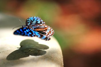 #butterfly #sammyiconfun - бесплатный image #199033