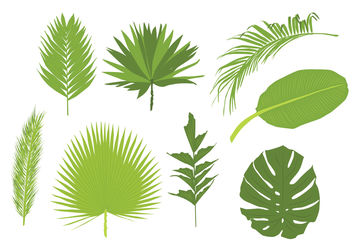 Palm Leaves Vectors - Free vector #199503
